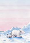 10er Set Postkarten, Kl. Eisbär, Abendspaziergang