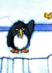 10er Set Postkarten, Pinguin