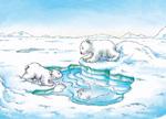 10er Set Postkarten, Kleiner Eisbär; Spiel und Spass