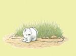 10er Set Postkarten, Kleiner Eisbär mit Ameisen